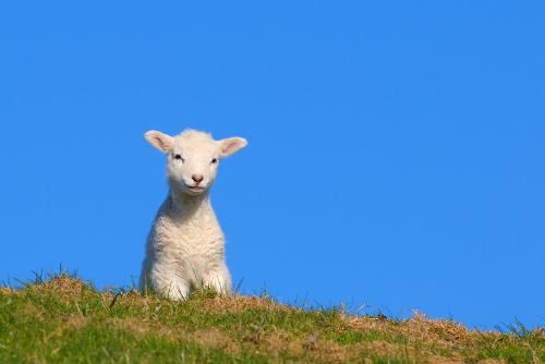 Schafe hüten als gemeinsame Outdoor-Aktivität für Mitarbeiter.