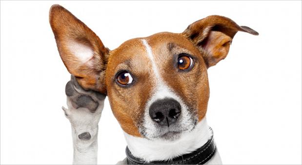 Viele Unternehmer nehmen ihren Hund mit zur Arbeit