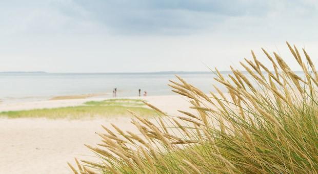 Dünengras am Strand von Hörnum auf Sylt.
