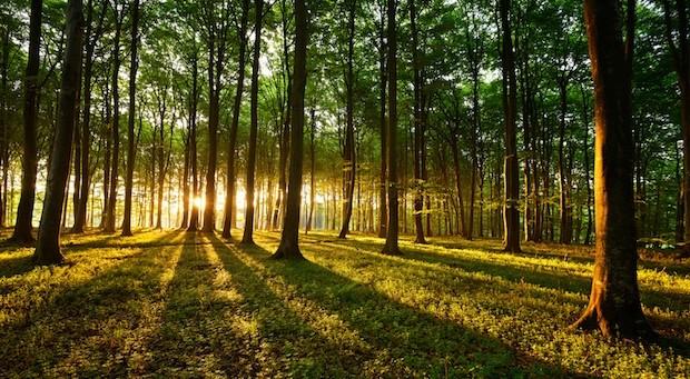 Viele Deutsche träumen vom eigenen Wald