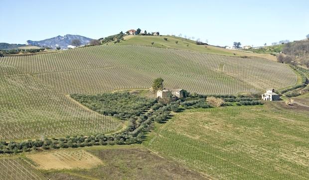 Das Weingut De Angelis