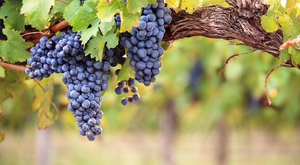 Wein: Reiner Genuss oder echte Anlage?