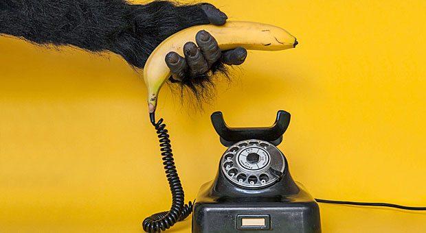 Damit Sie künftig so gern zum Hörer greifen wie der Affe zur Banane: 12 Tipps für die Telefonakquise.