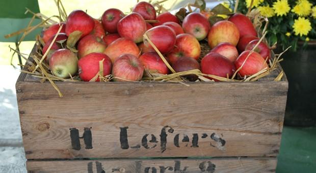 Tausende Tonnen Äpfel aus dem Alten Land sollten eigentlich nach Russland gehen.