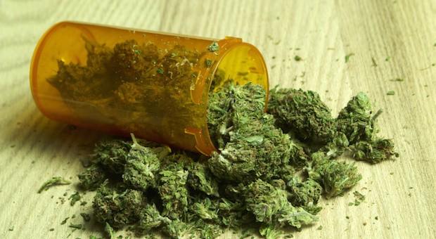 Eine Plastikdose mit Marijuana: Was Dealer erwirtschaften fließt ins BIP ein.