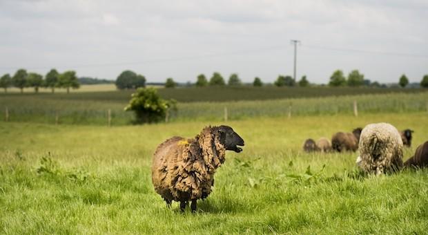 Junge Bauern, die Vieh und Land bewirtschaften, kommen immer schwerer an Weideflächen und Äcker.