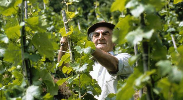 Deutsche Winzer profitieren vom Exportmarkt. 2014 fuhren sie die Rekordmenge von fast zehn Millionen Hektoliter Wein ein.