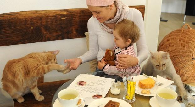 Von Paris über Berlin bis Singapur: Katzencafés erfreuen sich weltweit wachsender Beliebtheit.