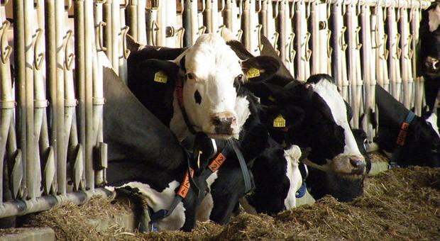 Nach 31 Jahren wird in der EU die Milchquote abgeschafft. Neue Milchseen wie in den 80er Jahren fürchtet die Branche trotzdem nicht.