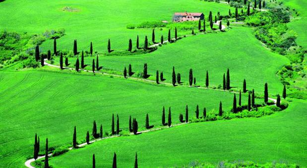 Zypressen prägen die Landschaft der Toskana