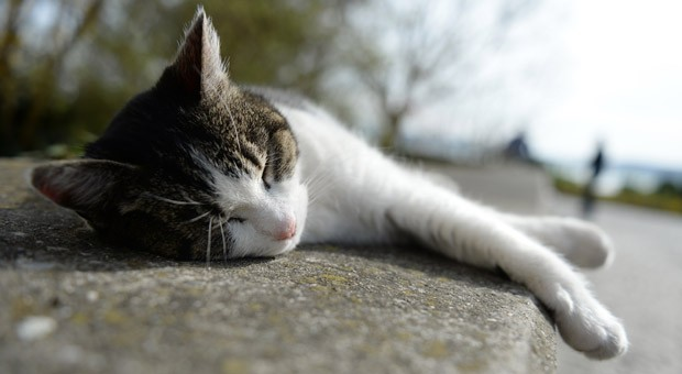 Die Menschen haben den Müßiggang verlernt. Doch ein kleiner Tagtraum bringt oft die besten Ideen - diese Katze macht's. vor