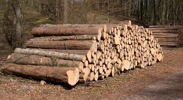 Mit der Vermessungsapp Fovea können Förster schnell und einfach Baumstämme vermessen.