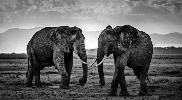 Tierbilder Schwarz Weiß : the family album of wild africa preisgekr nt so sch n k nnen tierbilder in schwarz wei sein ~ Markanthonyermac.com Haus und Dekorationen