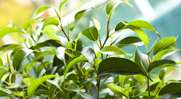 Buropflanzen Die 12 Besten Grunpflanzen Furs Buro Impulse