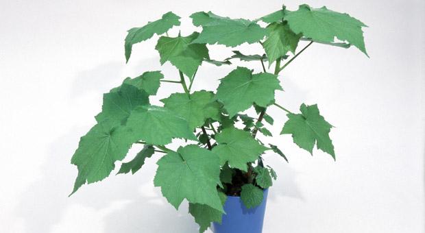 Büropflanzen Die 12 Besten Grünpflanzen Fürs Büro Impulse