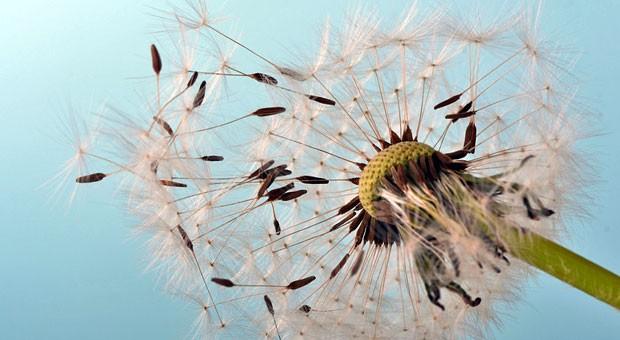 Erst hoch fliegende Hoffnungen, dann Ernüchterung: Fehler bei der Existenzgründung lassen viele Gründer schon in den ersten Jahren scheitern.