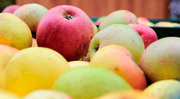 Es gibt über 500 Apfelsorten in der Rhön, aus denen unzählige Produkte hergestellt werden können. Doch diese Angebotsvielfalt kann den Kunden überfordern.