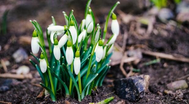 Wenn sich die Schneeglöckchen zeigen, naht der Frühling - und mit ihm nicht selten der Start neuer Unternehmensprojekte.