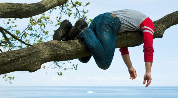 Ein Minderleister ruht sich auf einem Baum aus.