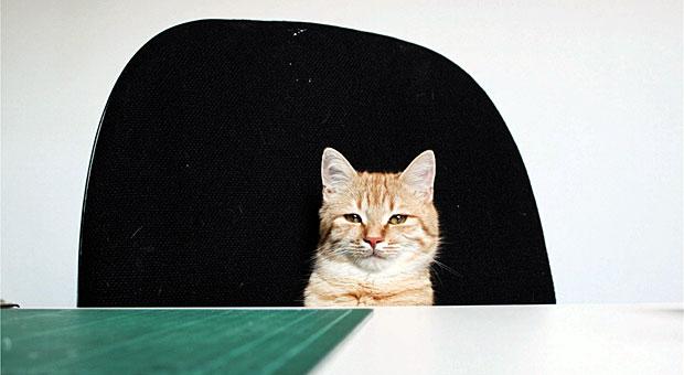 Was würde diese Katze wohl im Unternehmen ändern, wenn sie für einen Tag der Chef wäre? Vermutlich: Mehr Mäuse für alle ...