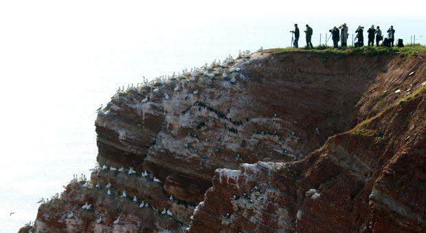 Ausharren, bis es soweit ist: Mit ihren Kameras wollen Urlauber auf Helgoland den Lummensprung festhalten.