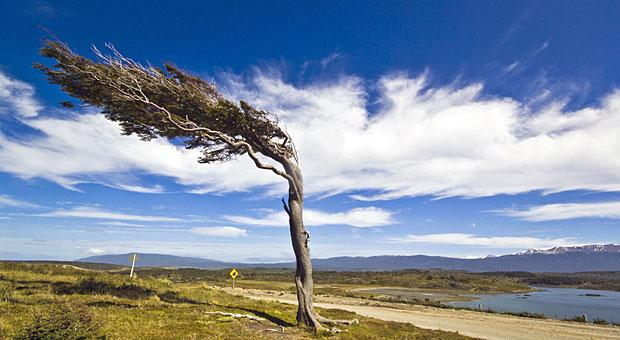 Stark und standhaft wie ein Baum, auch bei kräftigem Gegenwind - wer wünscht sich das nicht?  Experten zufolge gibt es Übungen, die die Resilienz stärken.