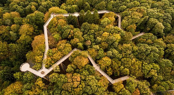 """Der Pfad """"Panarbora"""" rund 50 Kilometer östlich von Köln bietet an Wissens-Stationen Einblick in Flora und Fauna des umliegenden Waldes."""