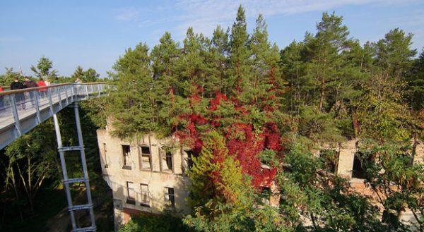 """Im brandenburgischen Beelitz gibt es den Pfad """"Baum und Zeit"""". Er führt über die Ruinen der Beelitzer Heilstätten."""