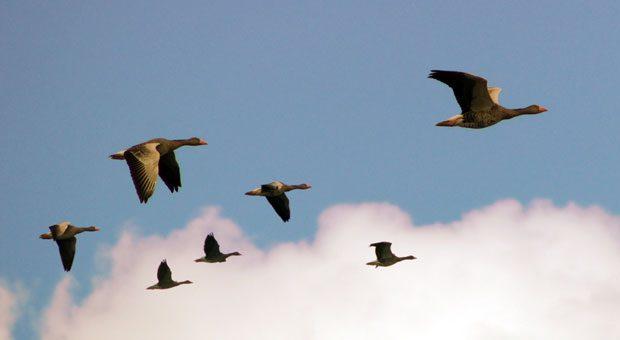 Spezialisten brauchen Entscheidungs- und Handlungsspielräume. Wer sie erfolgreich führen will, sollte ihnen Raum für hoch fliegende Ideen lassen.
