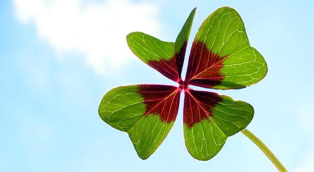 Wer ein vierblättriges Kleeblatt findet, hat einen Wunsch frei. Vielen Mitarbeitern reicht das nicht - sie haben gleich mehrere.