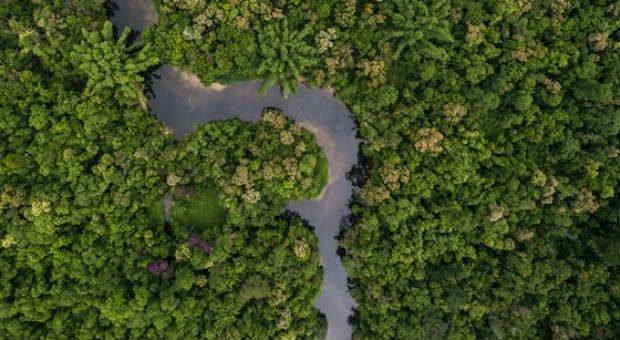 Die Umsatzsteuervoranmeldung ist für Sie so undurchschaubar wie das Blätterdach am Amazonas? Mit diesen Tipps bahnen Sie sich einen Weg durch den Paragrafen-Dschungel.
