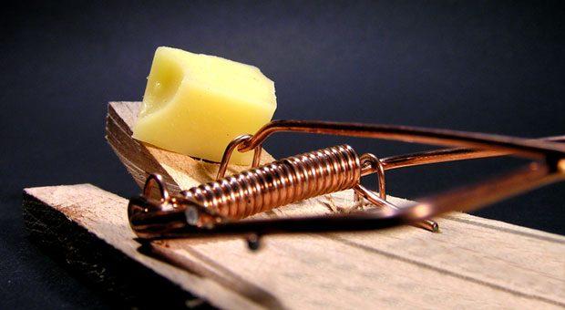 Vorsicht Falle! Dass der Käse nicht ein Festmahl, sondern den Tod bedeutet, ahnen Mäuse nicht. Ähnlich funktioniert oft unser Hirn: Es begeht Denkfehler und tappt in Wahrnehmungsfallen.