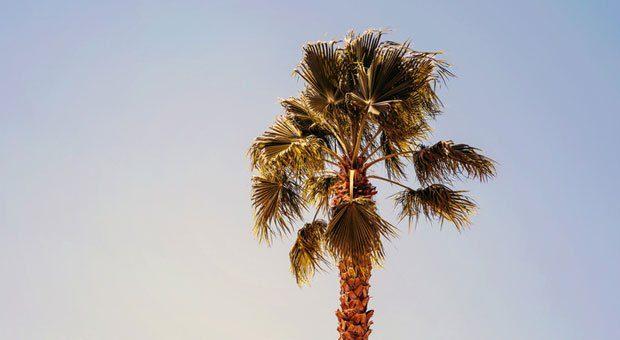 Raus aus dem Büro, ab unter die Palmen! Es gibt verschiedene Sabbatical-Modelle – jedes hat seine Vor- und Nachteile.
