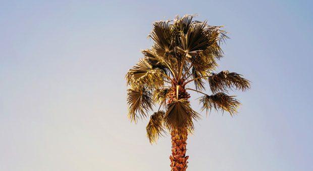 Raus aus dem Büro, ab unter die Palmen! Es gibt verschiedene Modelle, die ein Sabbatical möglich machen – jedes hat seine Vor- und Nachteile.