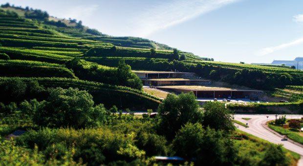 Das Weingut Franz Keller Schwarzer Adler in Oberbergen im Kaiserstuhl.