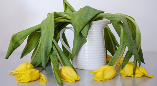 Kraftlos: Tulpen ermatten ohne Wasser, Mitarbeiter ermatten, wenn Sie keine Wertschätzung erfahren.